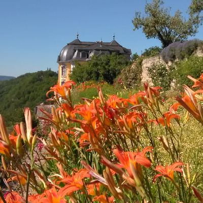 Lilien am Dornburger Schloss