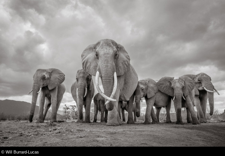 Will Burrard-Lucas, United Kingdom